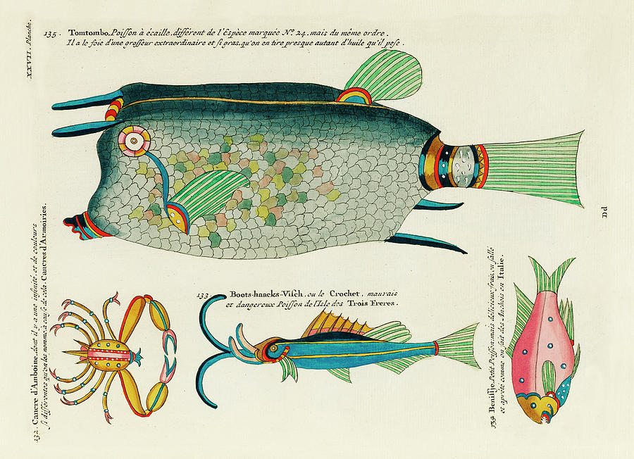 Vintage, Whimsical Fish And Marine Life Illustration By Louis Renard - Tomtombo, Benissje, Cancre Digital Art