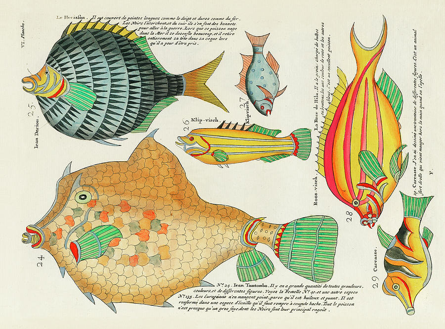Vintage, Whimsical Fish And Marine Life Illustration By Louis Renard - Tomtombo, Doriou, Rose Fish Digital Art