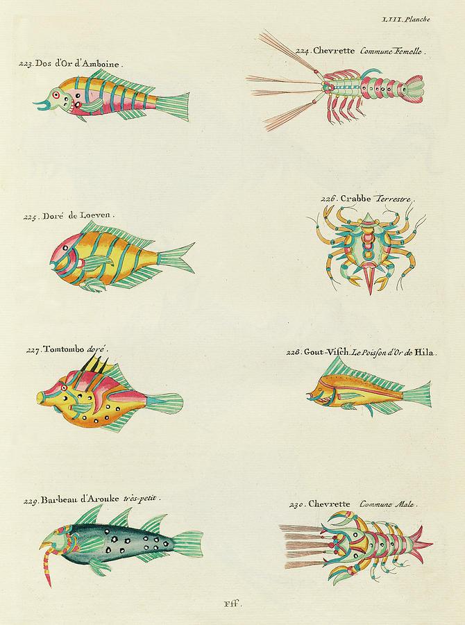 Vintage, Whimsical Fish And Marine Life Illustration By Louis Renard - Tomtombo, Shrimp, Crab, Digital Art