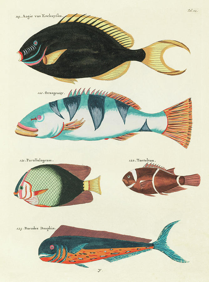 Vintage, Whimsical Fish And Marine Life Illustration By Louis Renard - Tontelton, Dorado Fish Digital Art