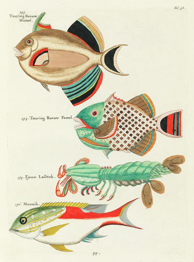 Vintage, Whimsical Fish And Marine Life Illustration By Louis Renard - Touring Reeuw, Munnik Digital Art