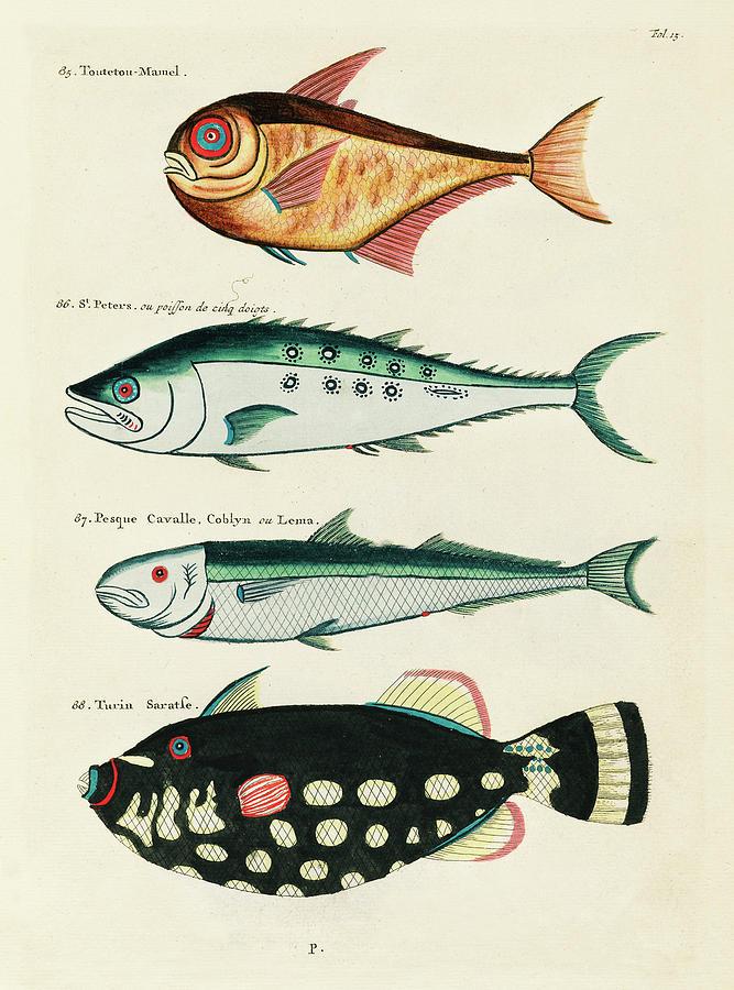 Vintage, Whimsical Fish And Marine Life Illustration By Louis Renard - Toutetou Mamel, Horse Fish Digital Art