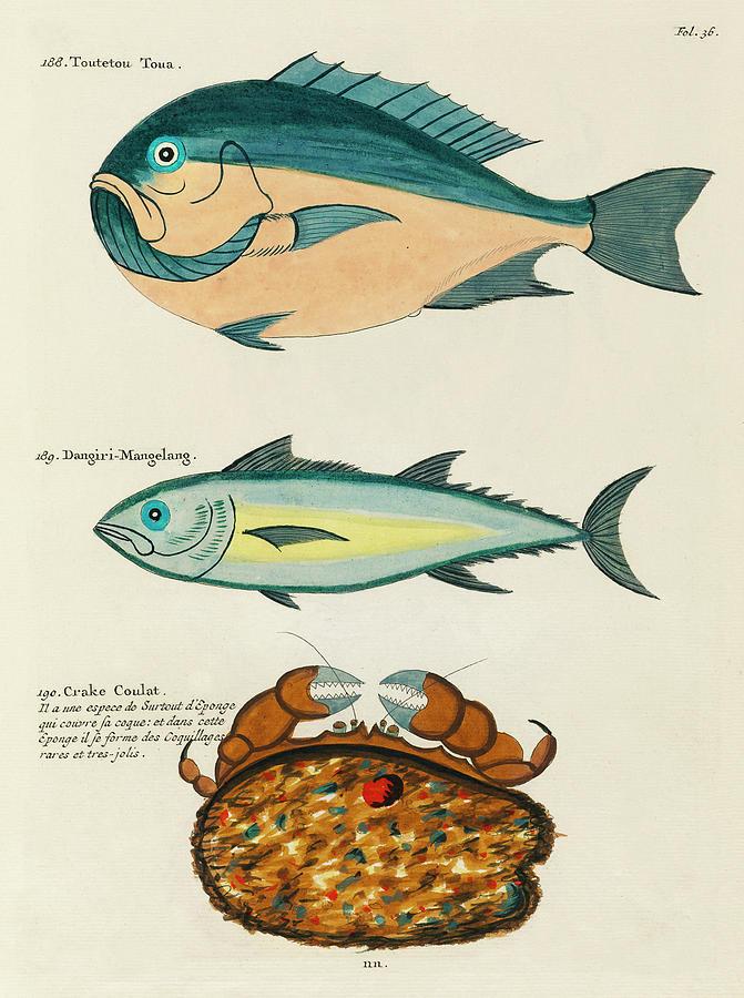Vintage, Whimsical Fish And Marine Life Illustration By Louis Renard - Toutetou Toua, Crake Coulat Digital Art