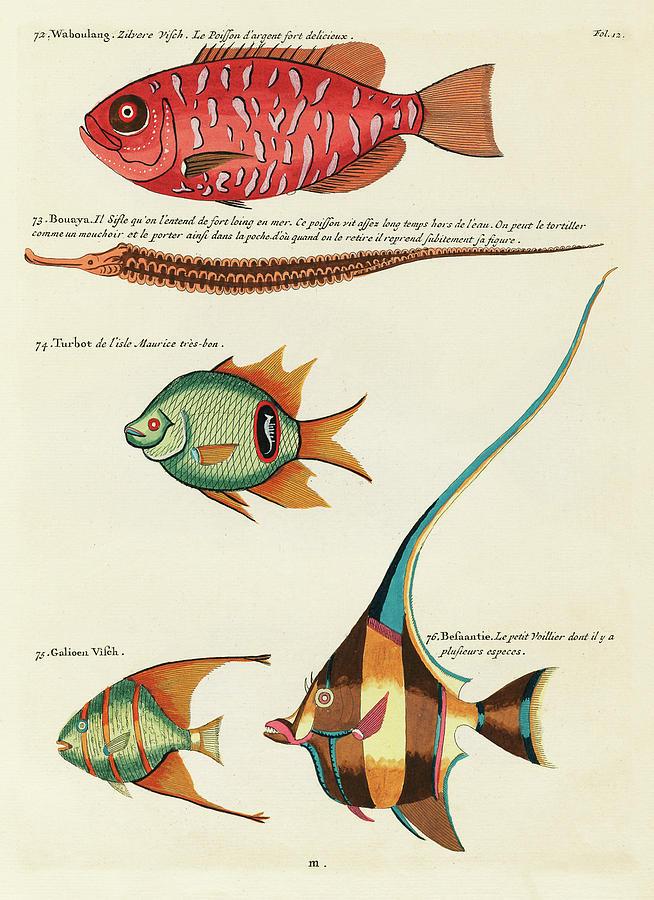 Vintage, Whimsical Fish And Marine Life Illustration By Louis Renard - Waboulang, Bouaya, Turbot Digital Art