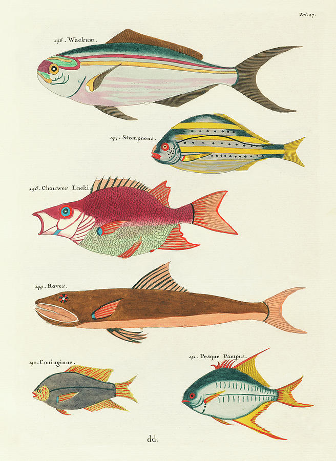 Vintage, Whimsical Fish And Marine Life Illustration By Louis Renard - Wackum, Stompneus, Rover Digital Art