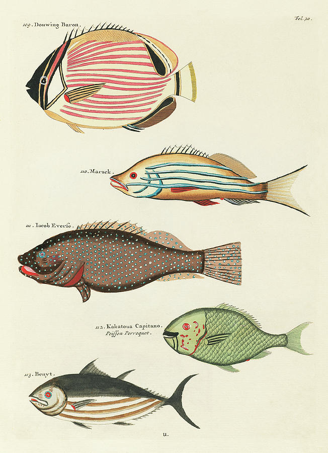 Vintage Tropical Fish And Marine Life Illustration By L Renard - Douwing Baron, Parrot Fish, Marack Digital Art