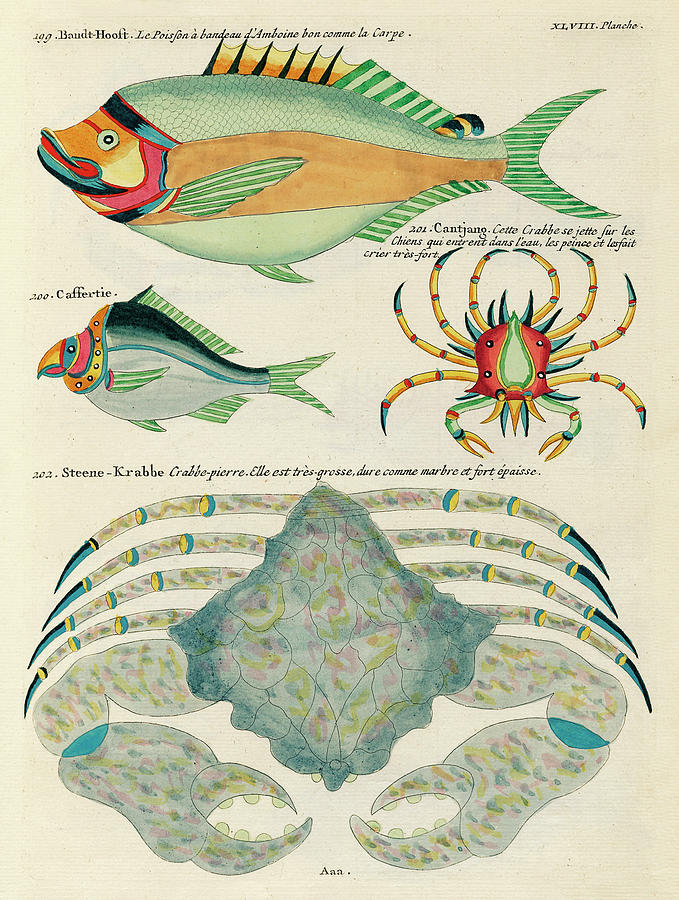 Vintage, Whimsical Fish And Marine Life Illustration By Louis Renard - Stone Crab, Bandt Hooft Digital Art