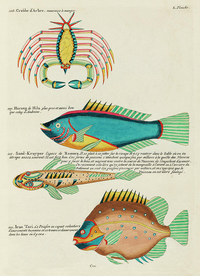 Vintage, Whimsical Fish And Marine Life Illustration By Louis Renard - Crab, Sand Creeper, Ican Taci Digital Art
