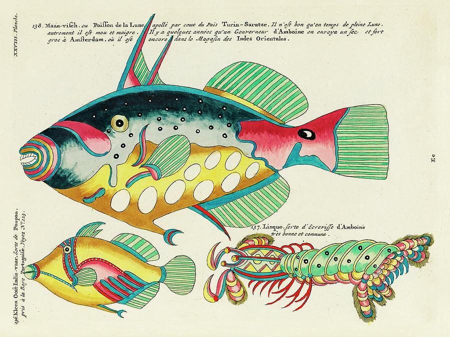Vintage, Whimsical Fish And Marine Life Illustration By Louis Renard - Crayfish From Amboine, Poupou Digital Art