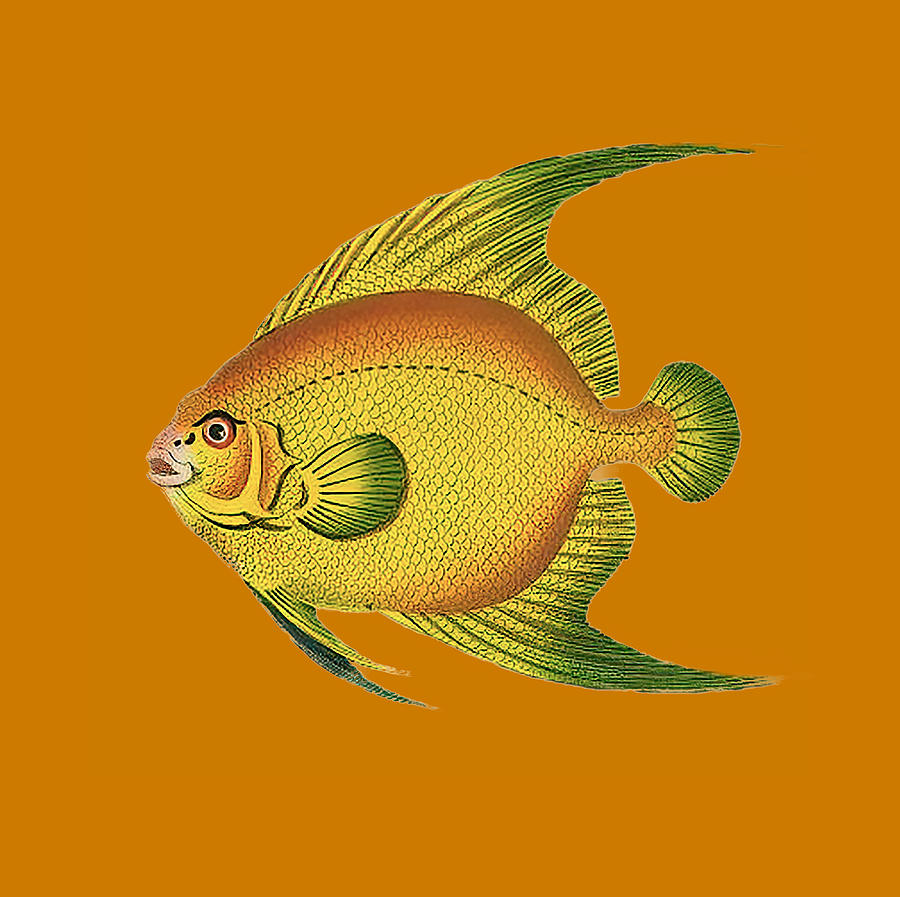 Vintage Yellow Fish T Shirt Design Drawing