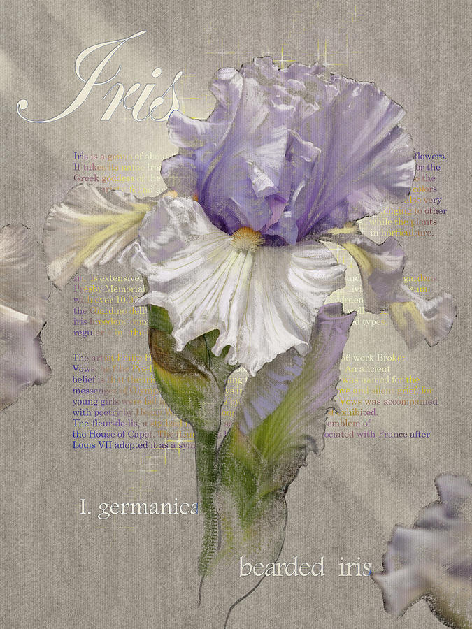 Violet and White Iris Graphic by Mark Mille