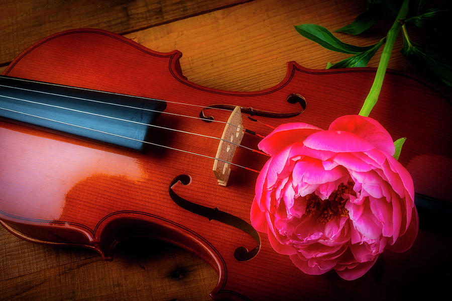 Violin Photograph - Violin And Pink Peony by Garry Gay
