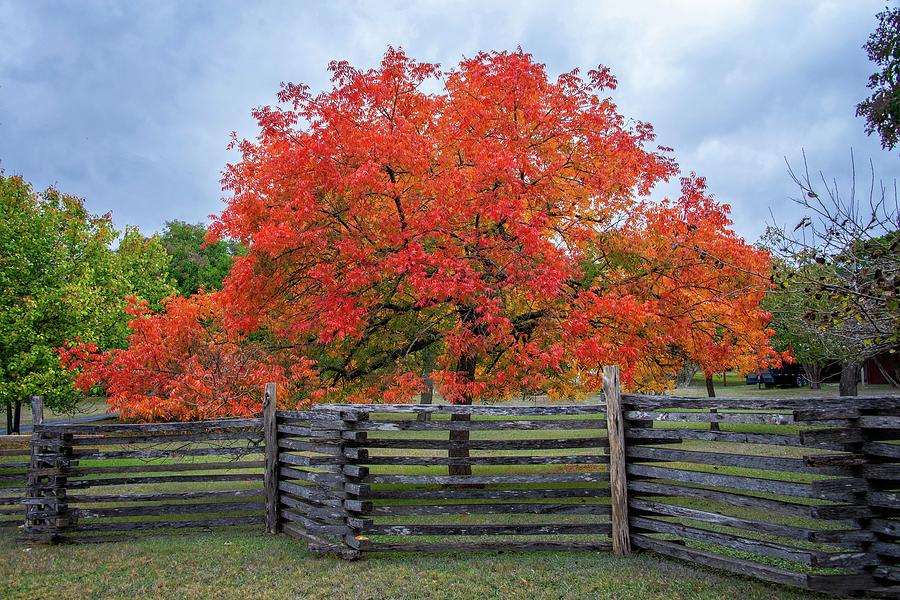 Vivid Colors of Fall in the Hill Country by Lynn Bauer