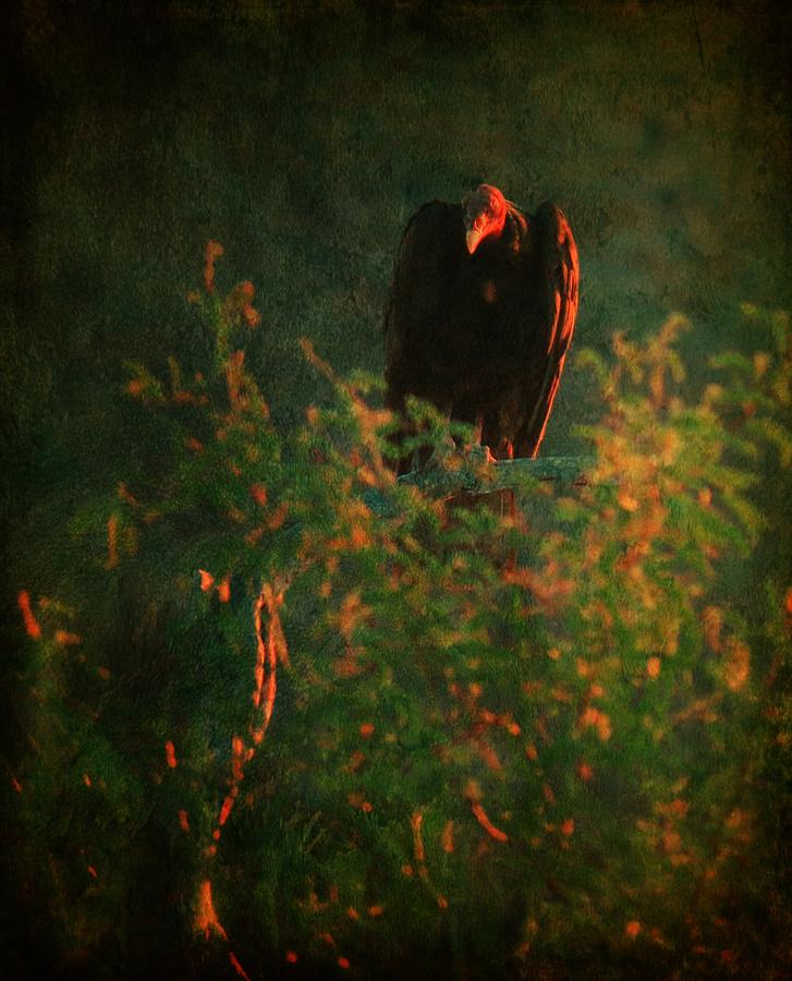 Vulture Grungy Green by Judy Kennedy