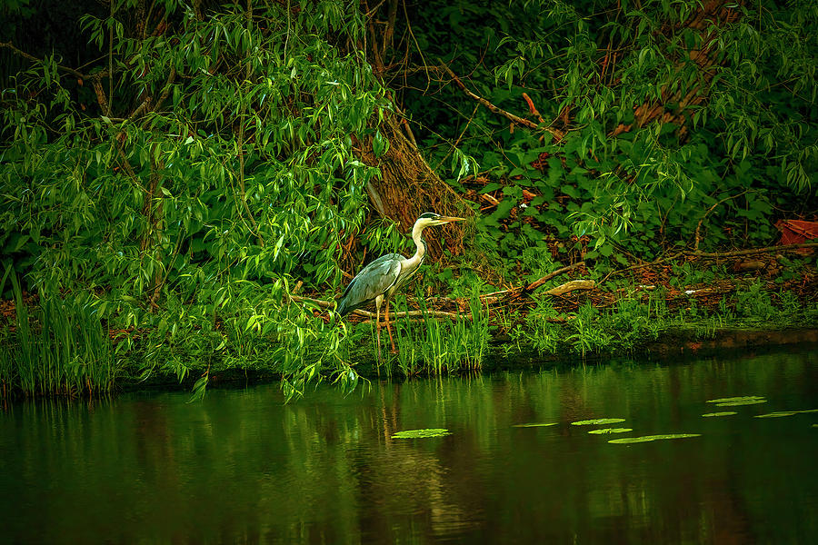 Waiting For Fish #j9 Photograph