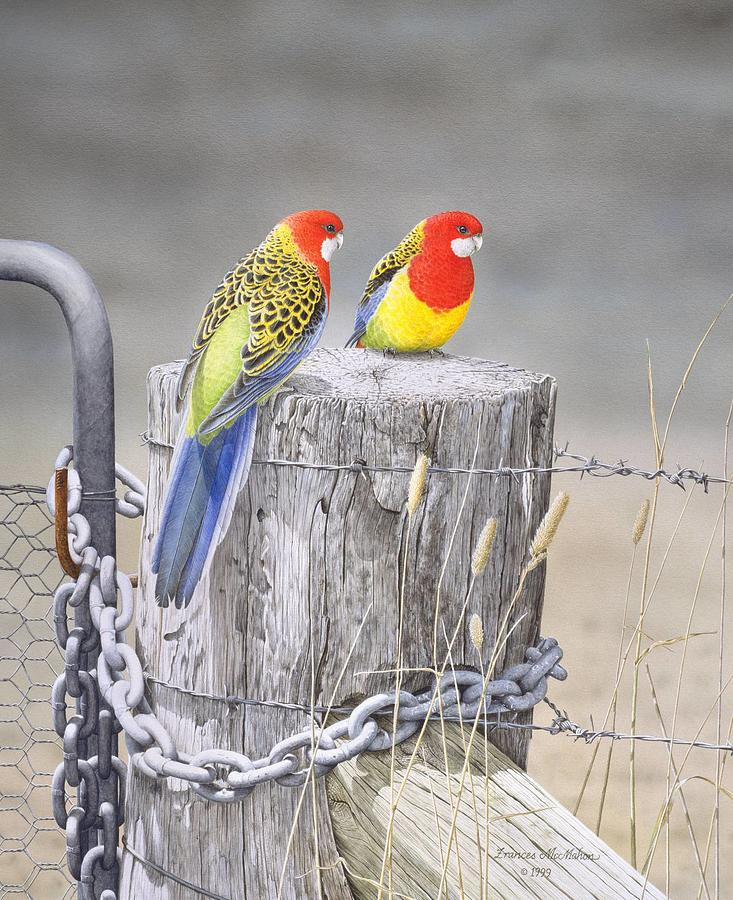 Bird Painting - Waiting for the Rains - Eastern Rosellas by Frances McMahon