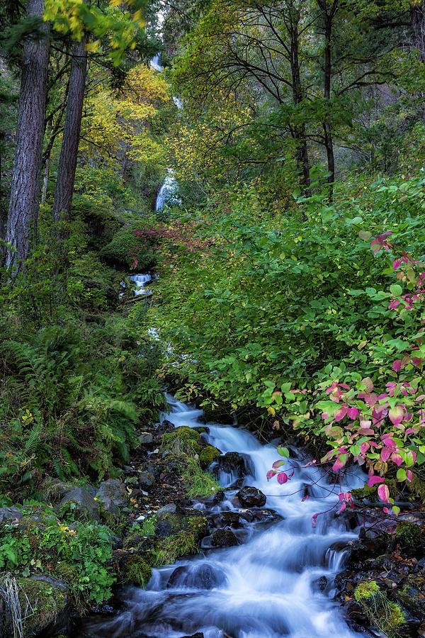 Wakeena Falls by Belinda Greb