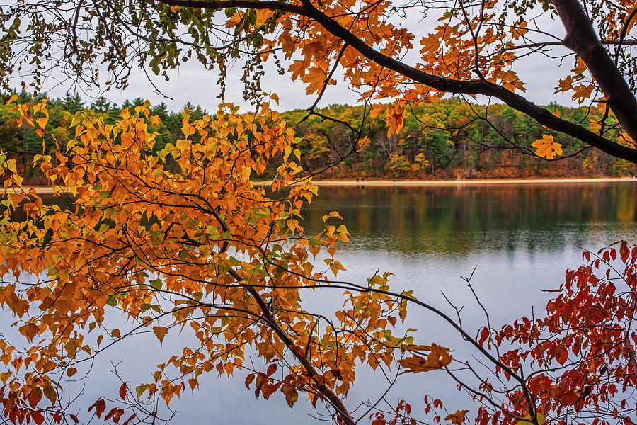Walden Pond Fall Foliage Concord Massachusetts Orange Leaves by Toby McGuire