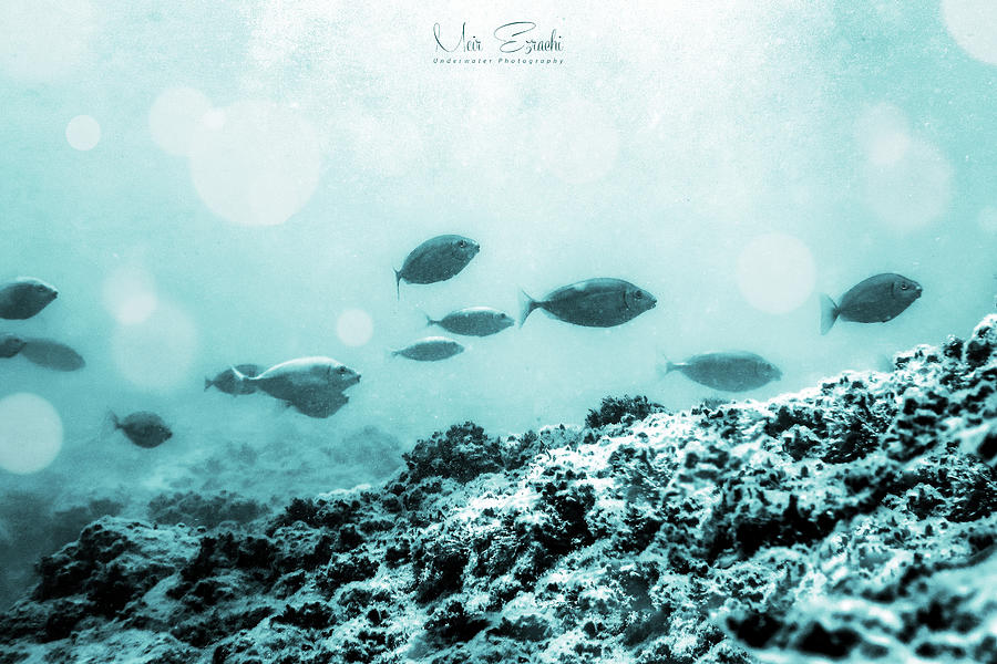 Underwater Photograph - Walk On By by Meir Ezrachi