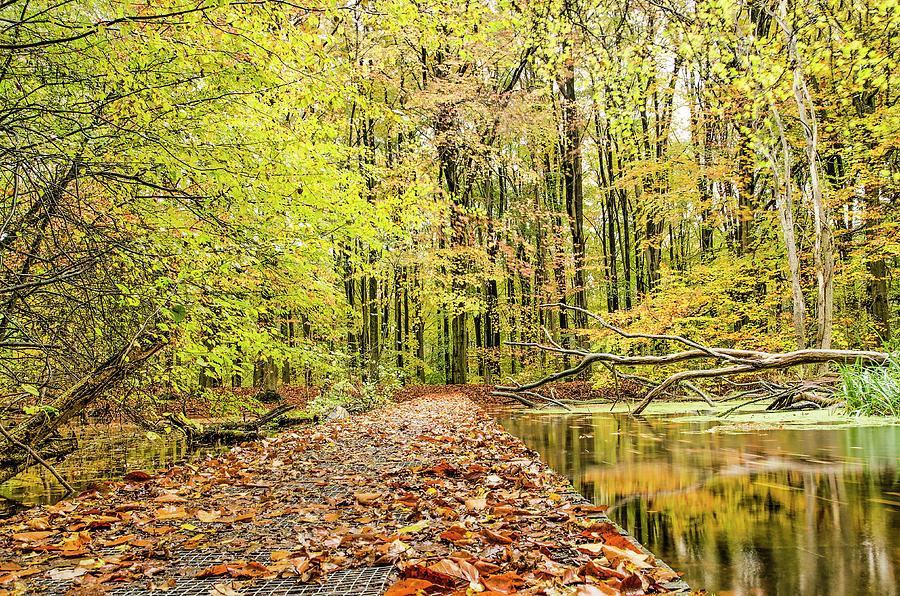 Walkbridge in the Forest by Frans Blok