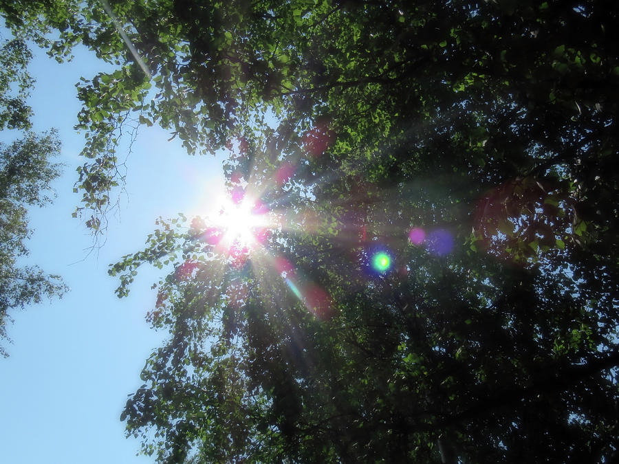 Walking In The Forest One Sunny Summer Day Photograph