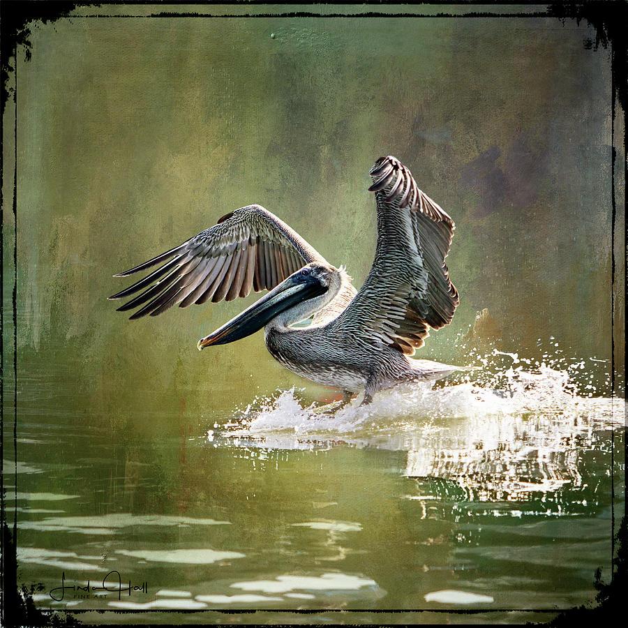 Pelican Digital Art - Walking on Water by Linda Lee Hall