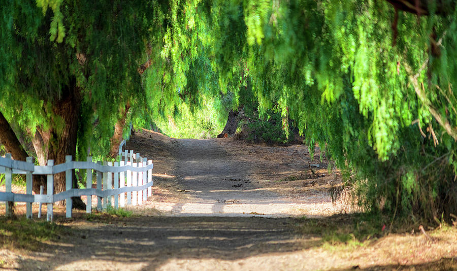 Trail Photograph - Walking The Trail by Mike-Hope by Michael Hope
