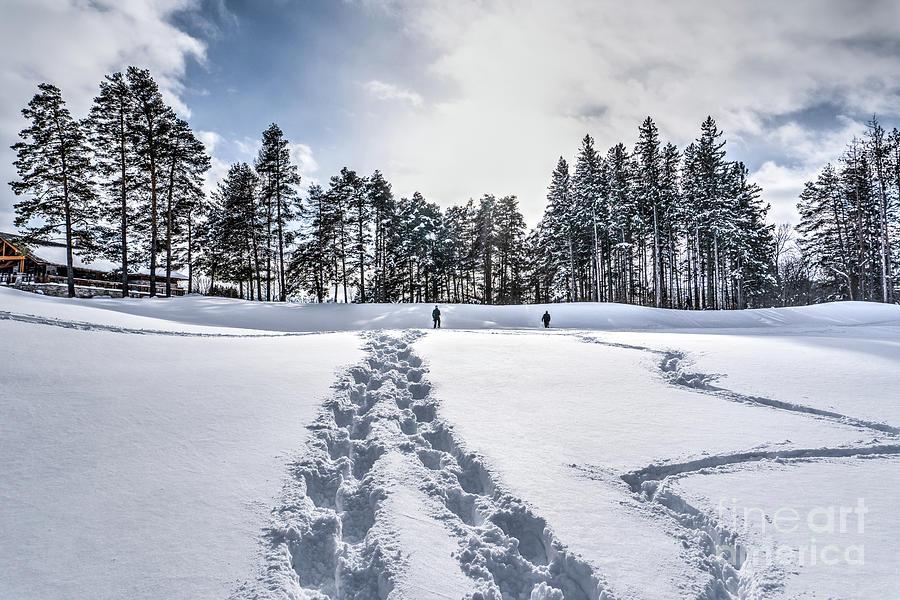 Walks in the Snow Photograph by Eden Watt