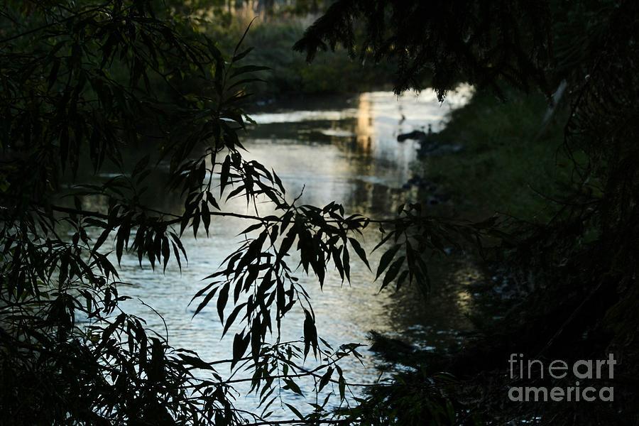 Wallowa River by Ann E Robson