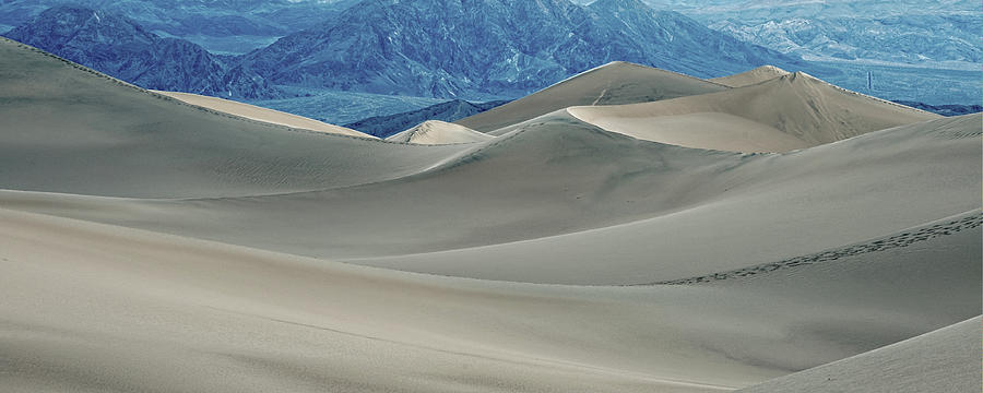 Wandering In The Dunes Photograph