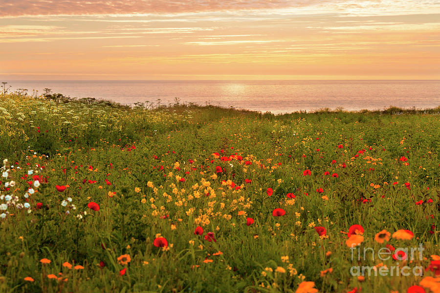 Warm Sunset At The Flower Fields Photograph