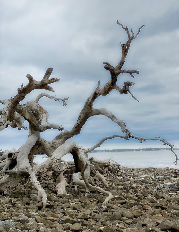 Deadwood Photograph - Washed up by Cindy Keen