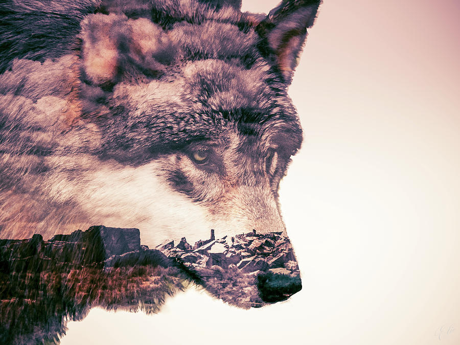 WATCHER OF THE WILDS by Elie Wolf