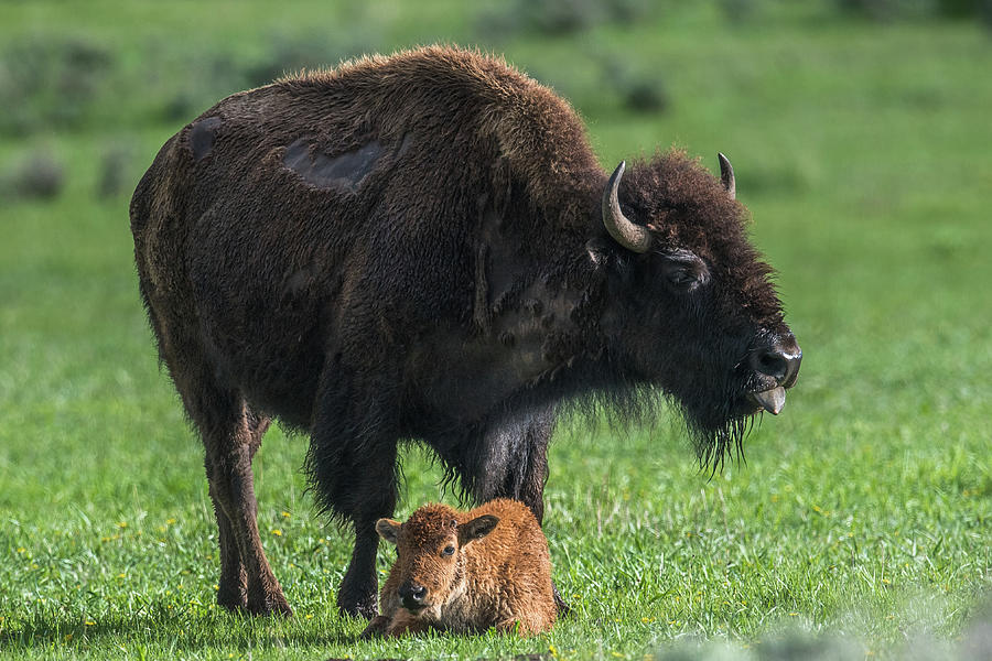 Watching Over Baby by Paul Freidlund