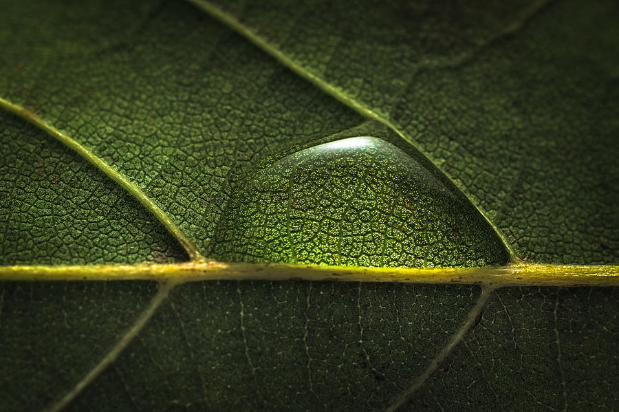 Water drop on leaf Photograph by MirageC