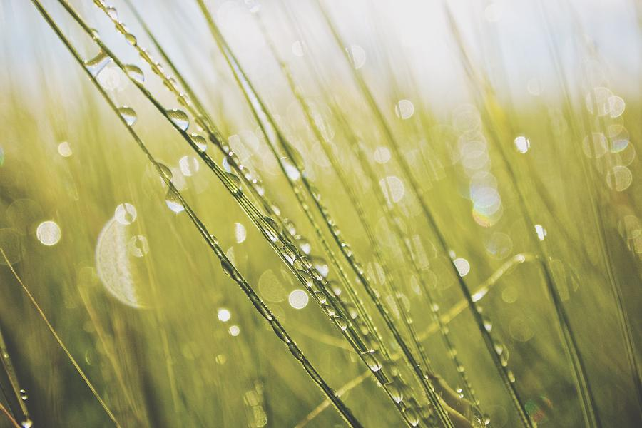 Water Drops On Grass Blades Photograph by Thomas Hauser / EyeEm