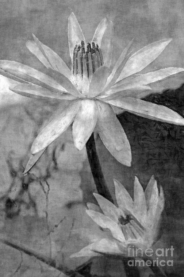 Flowers Photograph - Water Lilies, In Black And White Textures by Banyan Ranch Studios