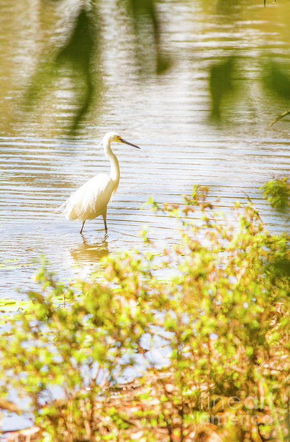 Lake Photograph - Water Wonders by Jorgo Photography - Wall Art Gallery