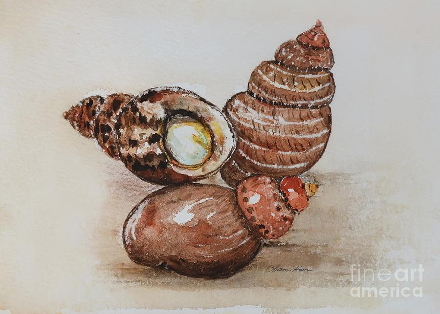 Watercolor Seashells by Olga Hamilton