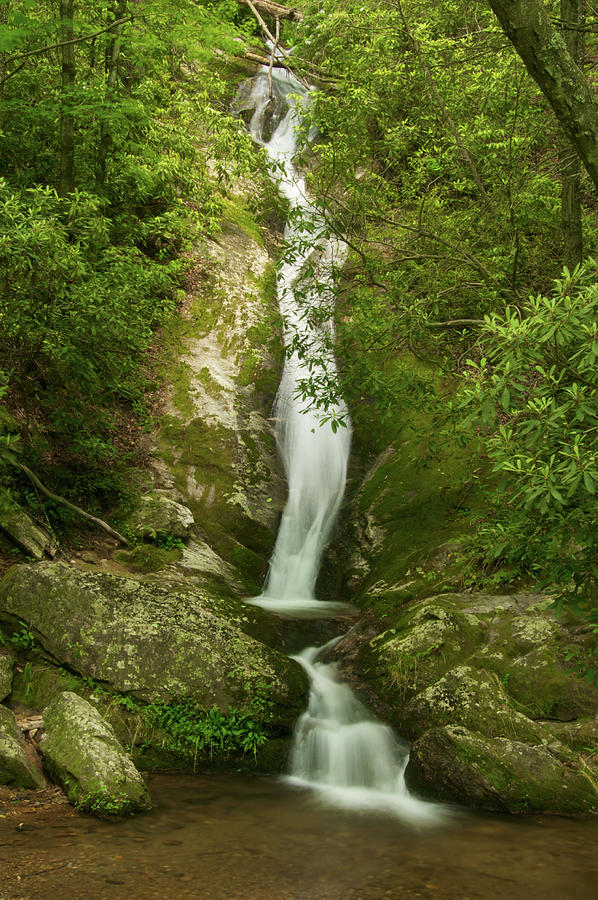 Waterfall Photograph - Waterfall in the Forest by Melissa Southern