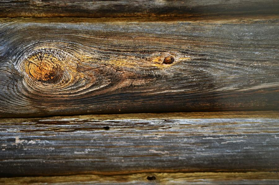 Weathered Board Knot                                      by RD Erickson