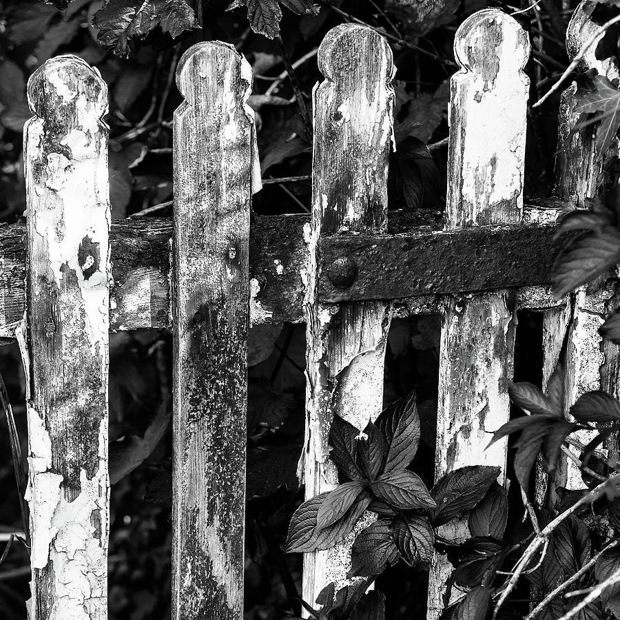 B W Photograph - Weathered Gate by Bear R Humphreys