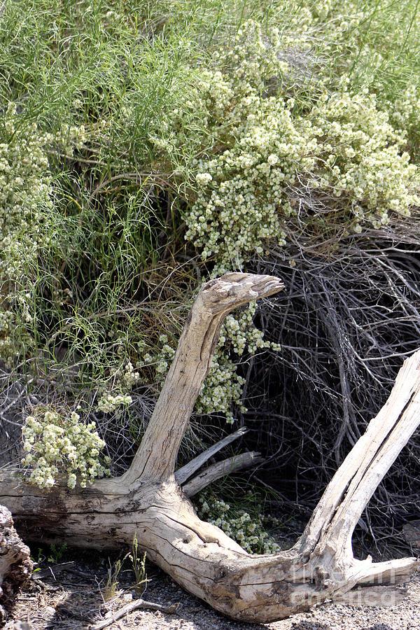 Weathered Log in Coachella Valley Wildlife Preserve by Colleen Cornelius