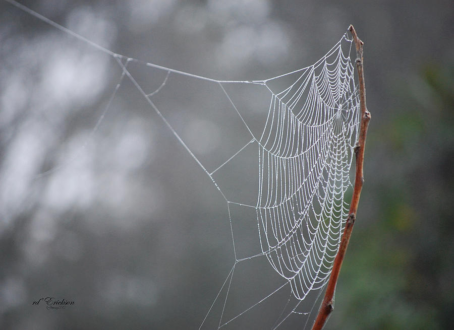 Web Stretch to catch the morning dew by RD Erickson