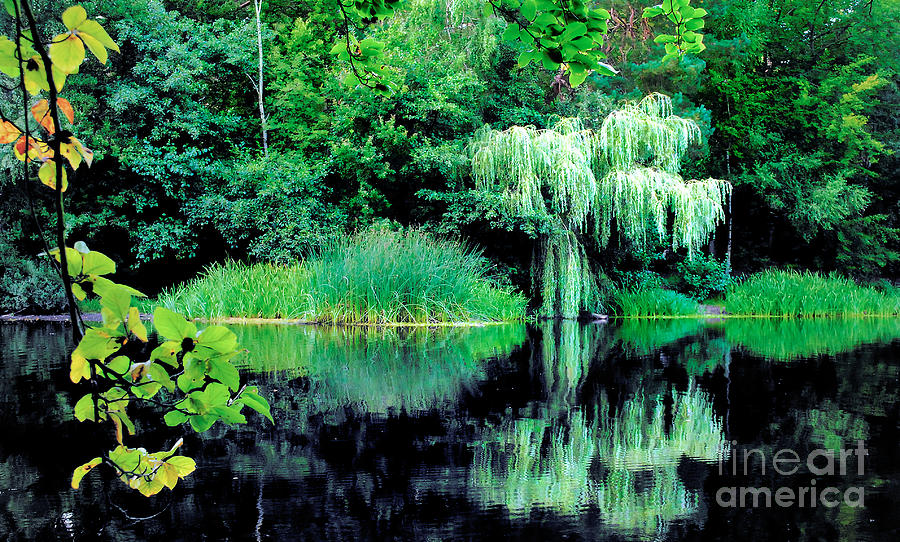 Weeping Willow Over The Lake Photograph