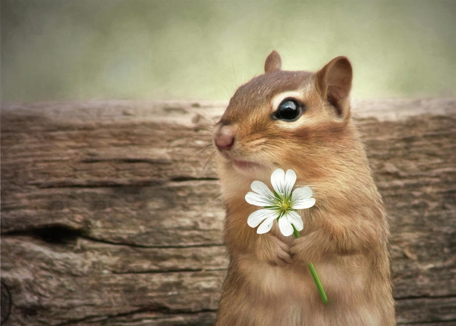 Chipmunk Mixed Media - Welcome Spring by Lori Deiter