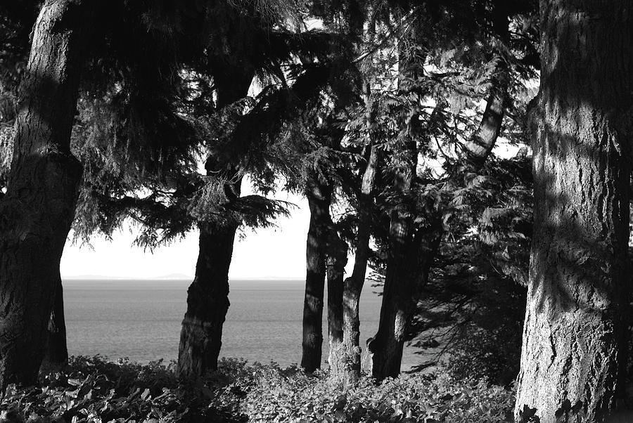 Western Hemlock Grove. Olympic Peninsula Photograph