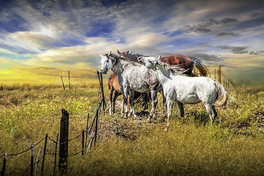 Western Horses By The Pasture Fence Under A Sunset Cloudy Sky Photograph