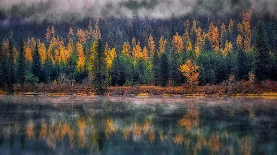 Western Larch Photograph