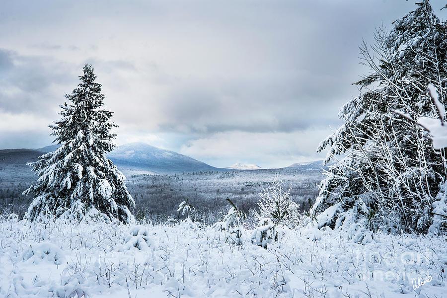 Western Maine Hills by Alana Ranney
